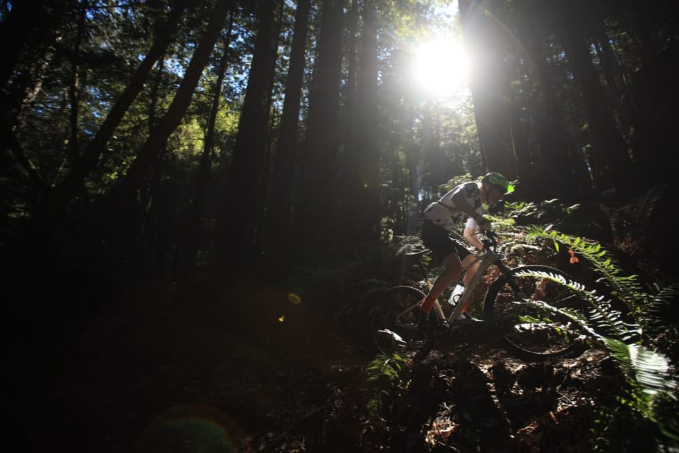 MØRKE PARTIER: Åpne enger og mørke skoger kjennetegner stiene i Santa Cruz. Foto: Gary Perkin
