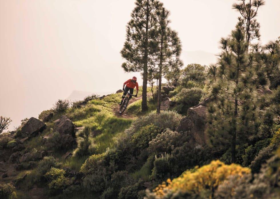 OPP NED: På Gran Canaria, som i Norge, er tregrensa på ca 1000 meter over havet, men omvendt. Trærne starter å vokse på 1000 moh.