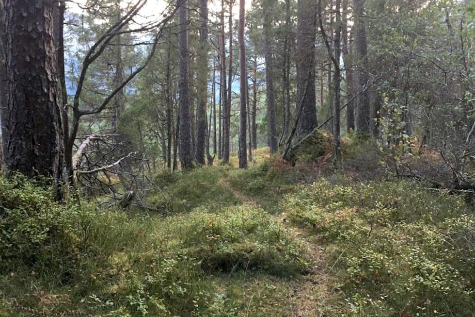 Førdsnipa 1 Foto Håvard Grimelid 1200x800