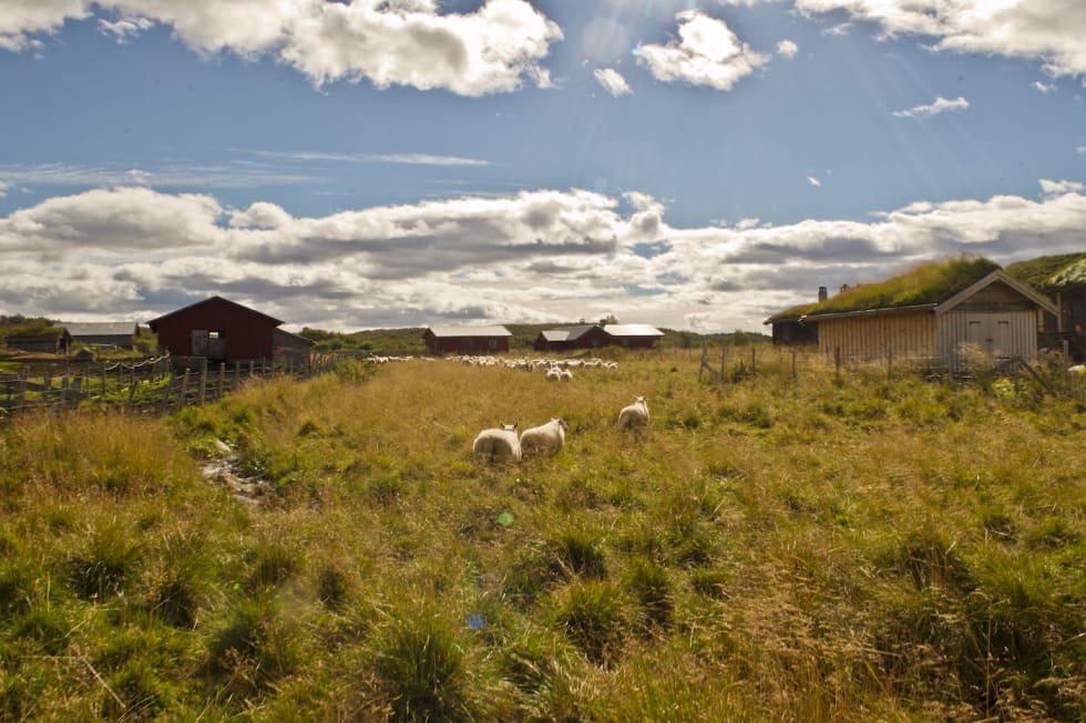 Vingelen-magnhildalen Foto Rørosregionen 1400x933
