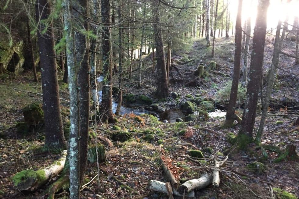 Trails 1 - Trond Dyrnes 1400x933