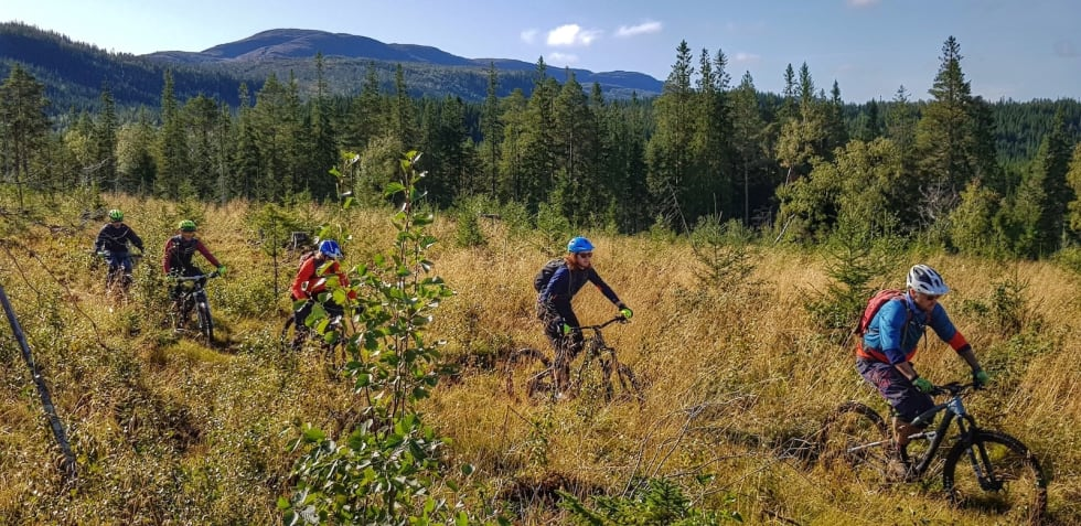 Onrådet Hårskallen byr på både høyfjellsstier og skogsterreng. Foto: Tommy Aslaksen