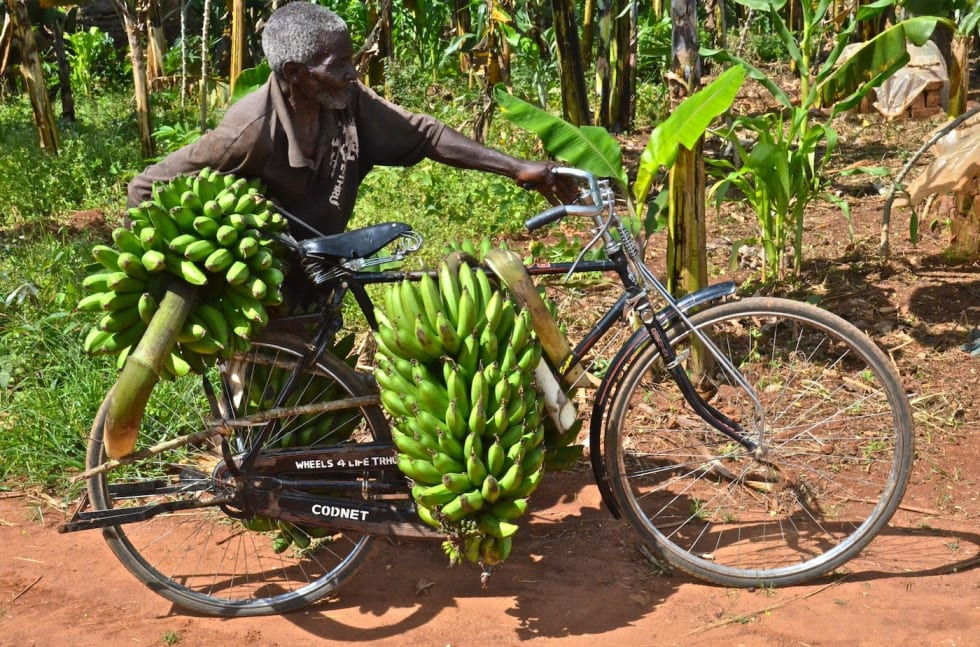 Banana transport Photo Carmen Freeman-Rey 1400x924