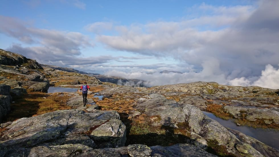 Gullruta - Gjermund Nordskar 1200x