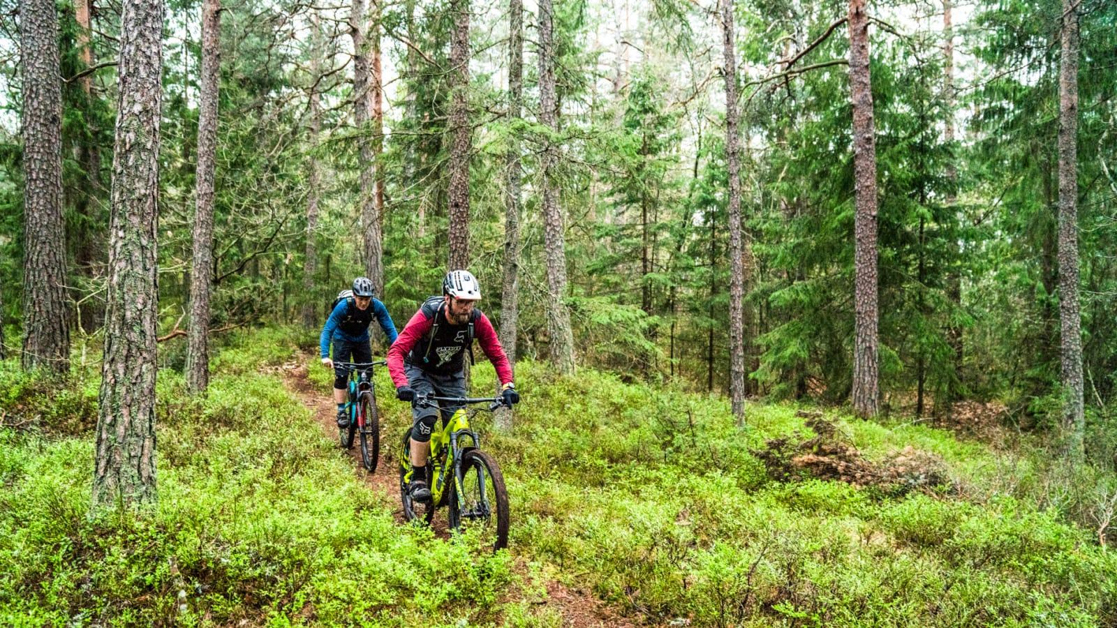 GRAN: Henrik Kippernes jager Truls A Ekelund gjennom én av mange skogstyper på Nøtterøy. Bilde: Magnus Roaldset Furset