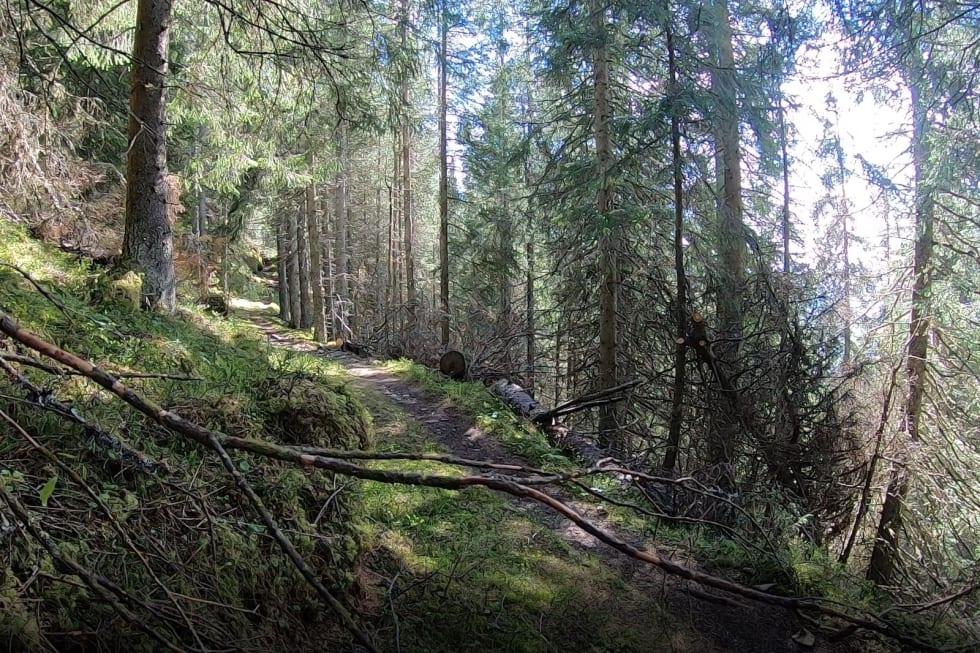 Alle søndagens etapper byr på nye stier i skogene på Hadeland. Foto: TraktorLand Enduro