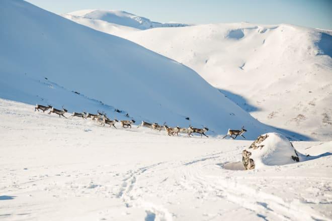 OPPLEVELSE: Vi var ikke alene i fjellet på denne turen. Foto: Line Hårklau