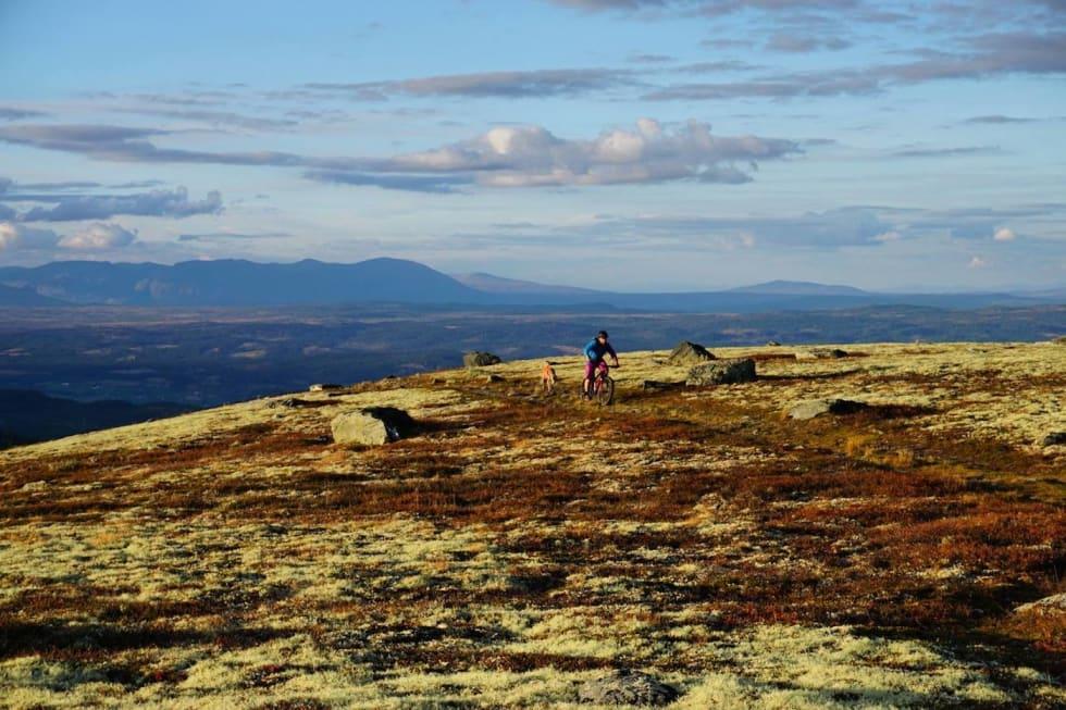 Fall Cycling 2016 Dyna - Ove Grøndal 1400x933