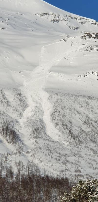 STORT: Skredet gikk på Blåbærfjellet i Tamokdalen torsdag. Foto: Aadne Olsrud