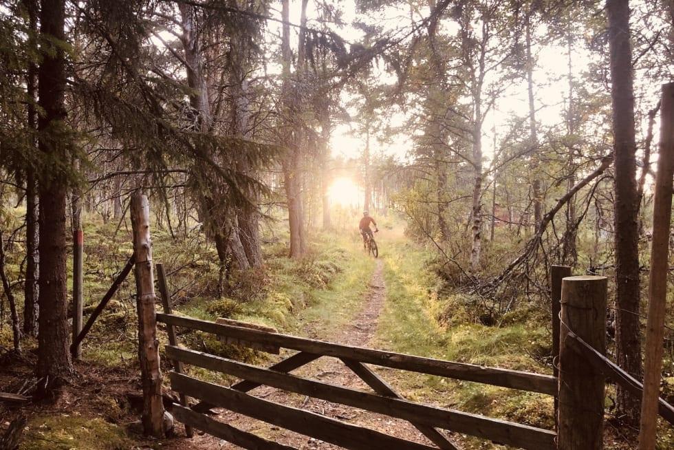 Rørosområdet byr på både skogsterreng så vel som det klassiske fjell- og viddelandskapet. Foto: Maren Todal