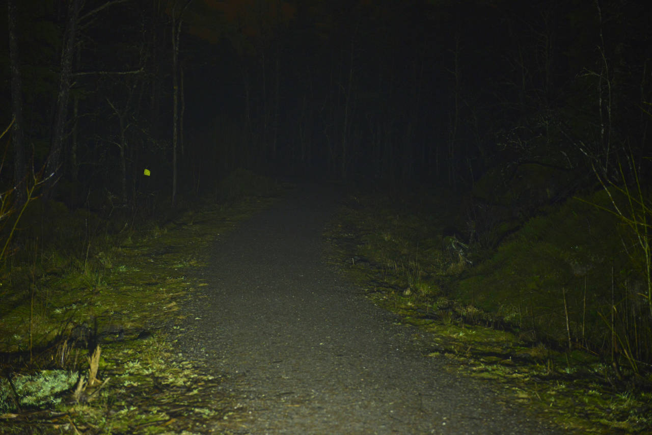 lupine betty RX14 m