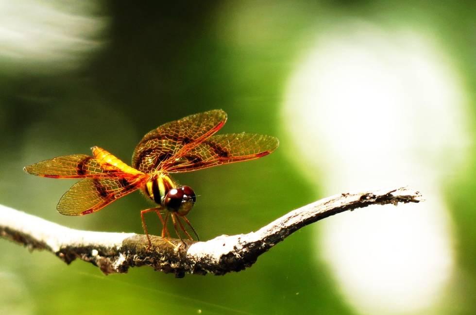 Amazonas-på-flåte-6