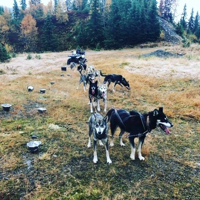 Hundekjøring trening barmark