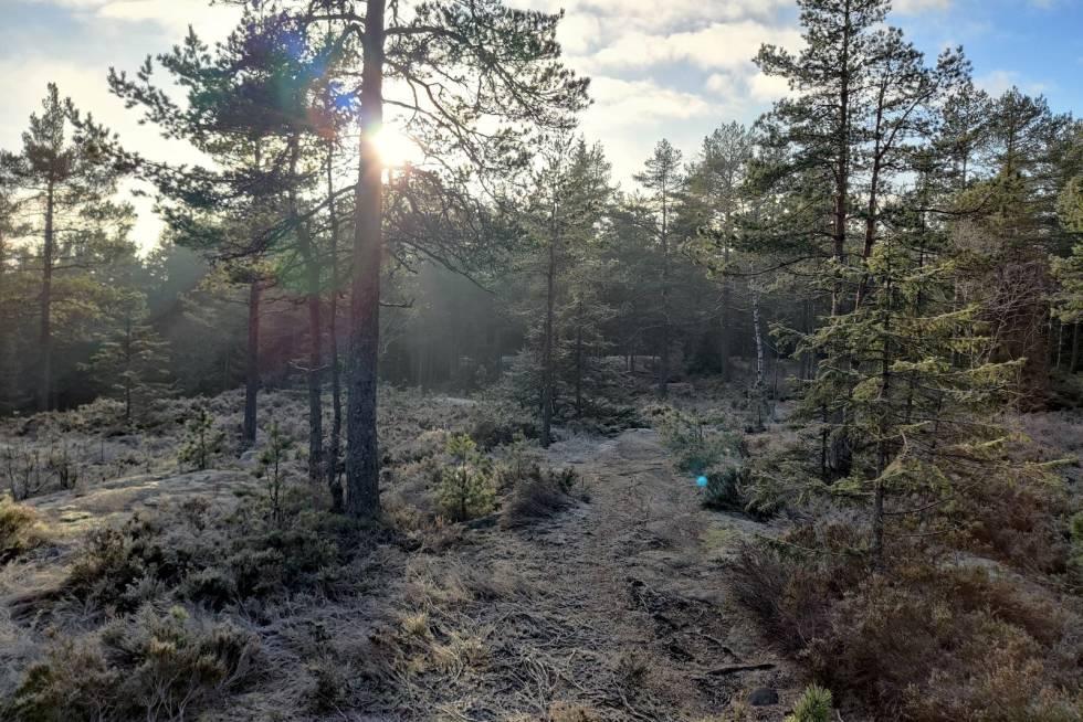 Fra Fredrik Haraldseths sitter i Lillomarka på lørdag. Foto: Fredrik Haraldseth