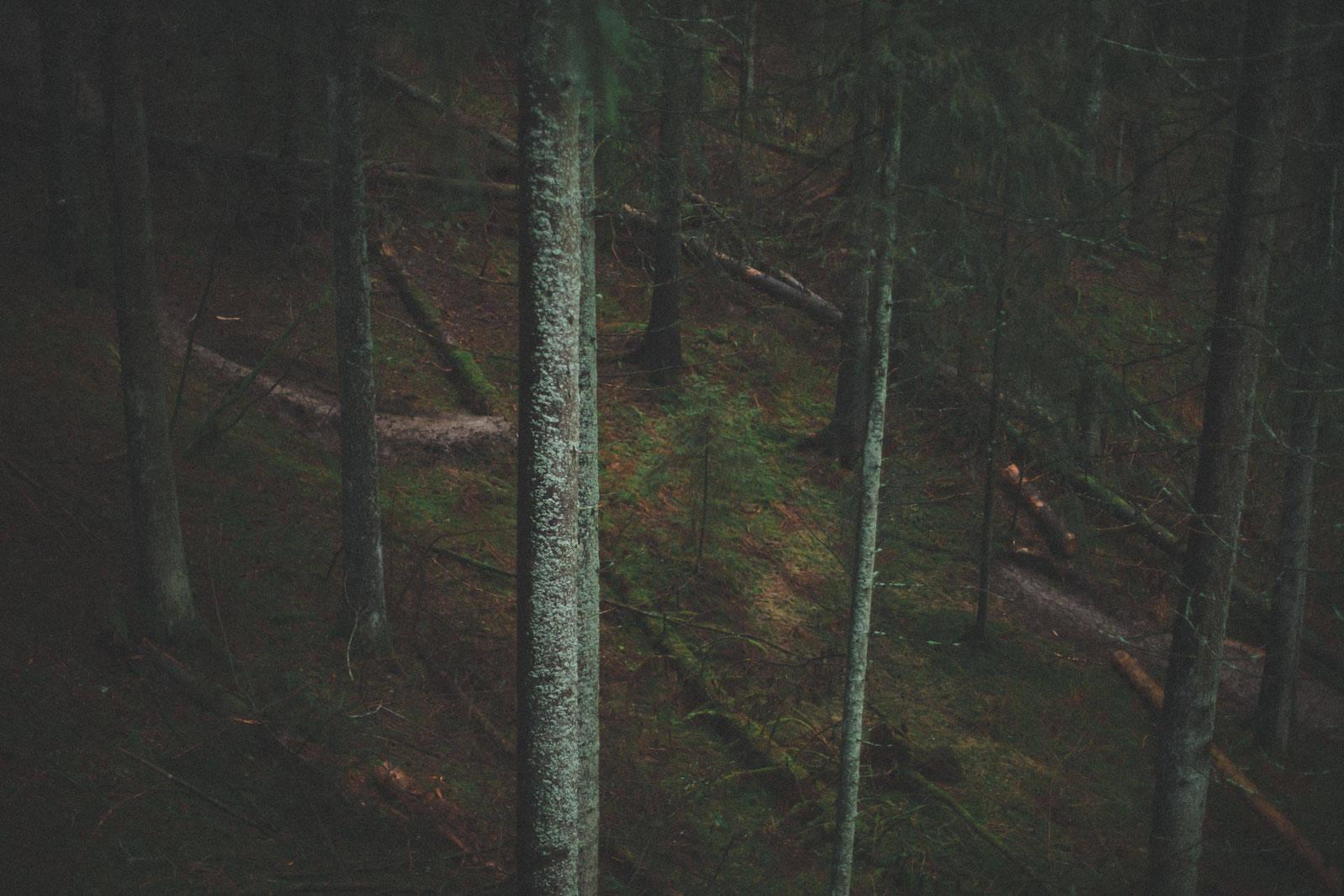 Brage-Vestavik-4