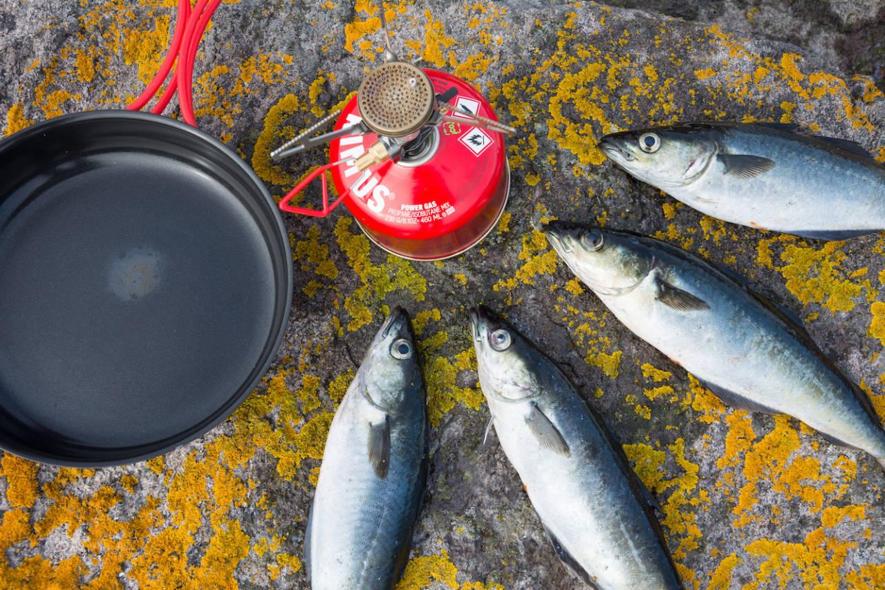 lyr fisketur turmat