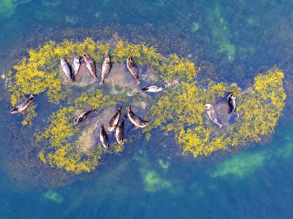 Sel på et skjær i sjøen. Foto: Michael Poltermann / Havforskningsinstituttet