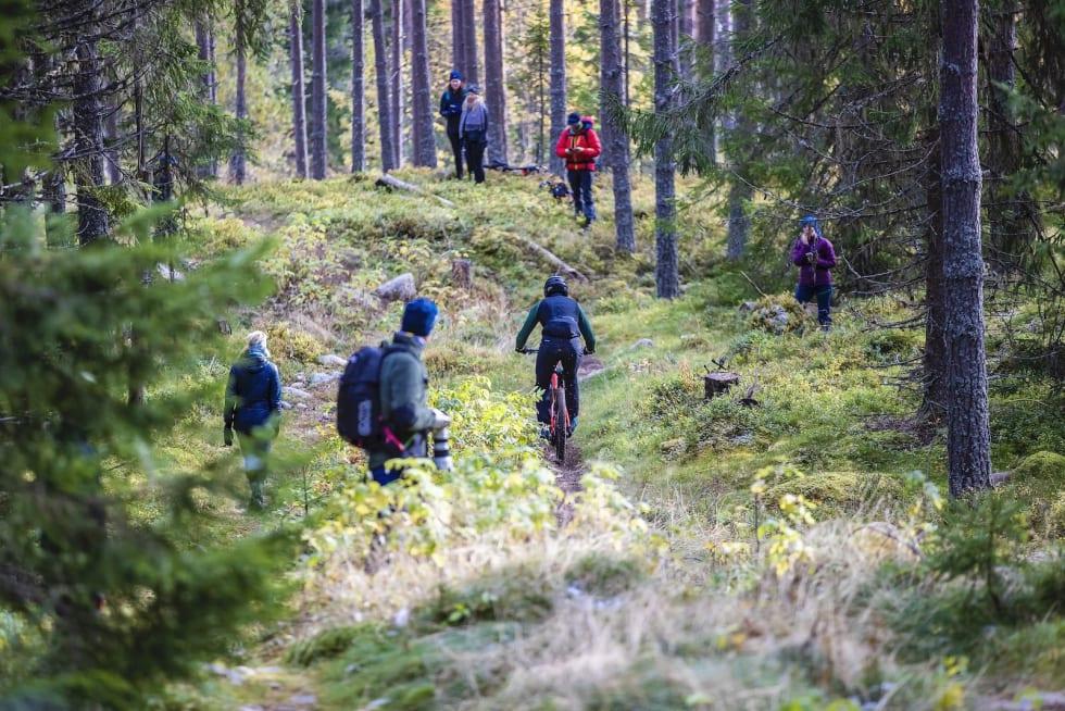 Skogen var full av skuelystne. Foto: Pål Westgaard