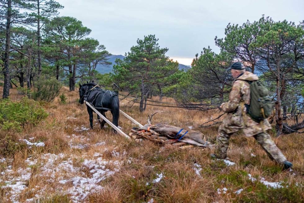 Hest-på-hjortejakt-11