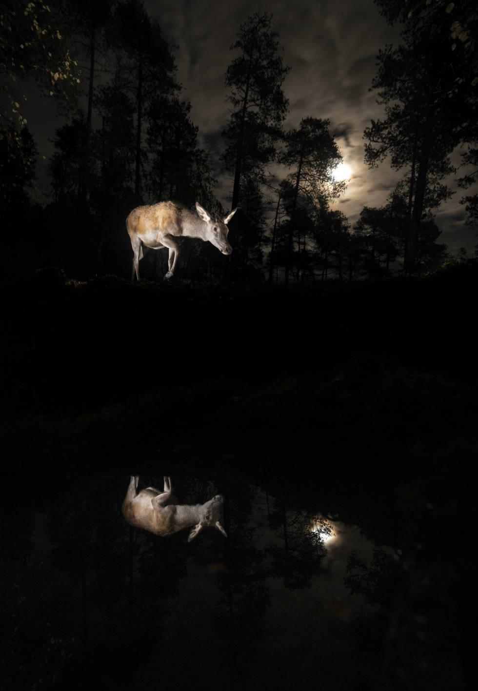 hjort vegard aasen naturfoto