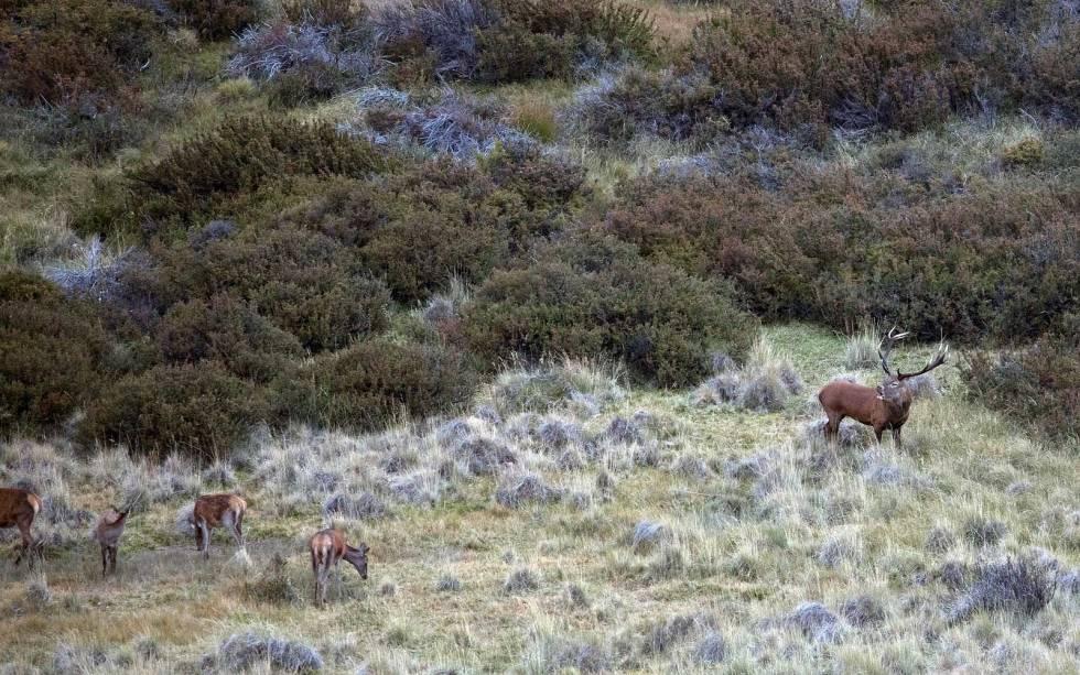 Hjortejakt-i-Argentina-Patagonia-7