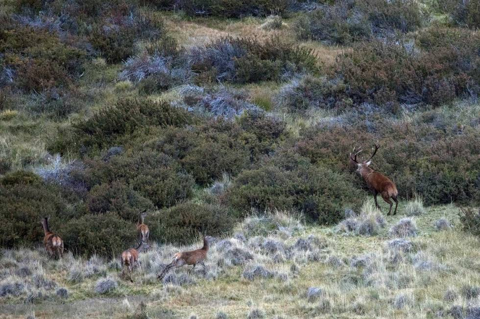 Hjortejakt-i-Argentina-Patagonia-8