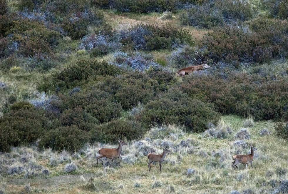 Hjortejakt-i-Argentina-Patagonia-9