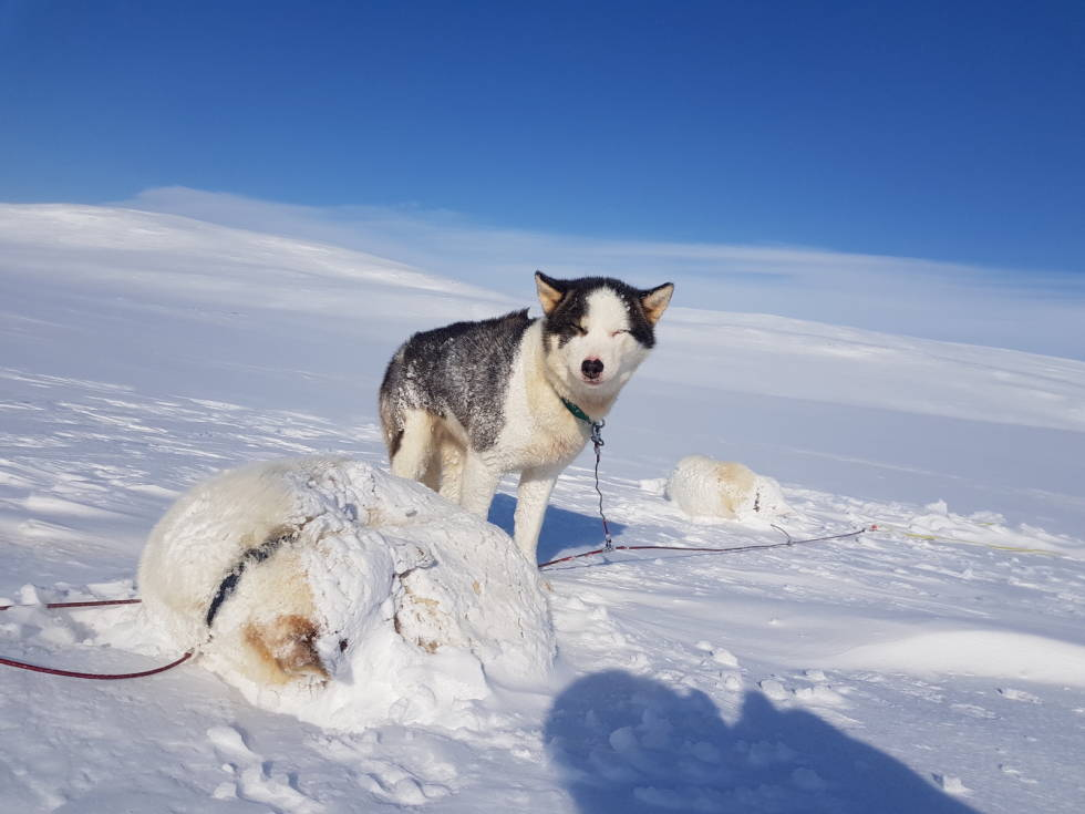 hundekjøring-kjell-harald-myrseth-trappers-farm