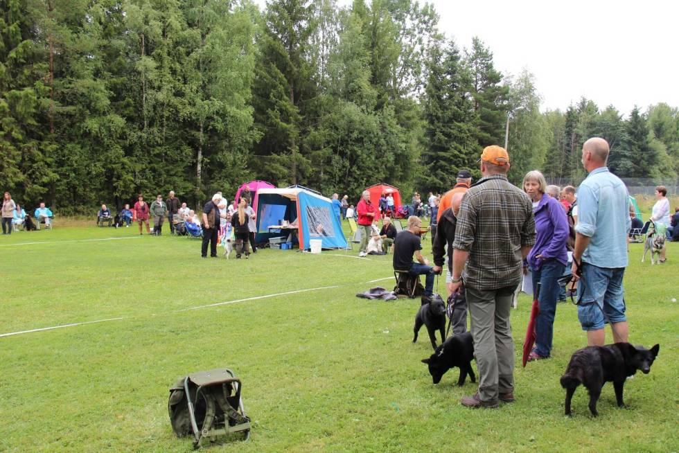 Hundeskolen-Utstilling-av-hund-2