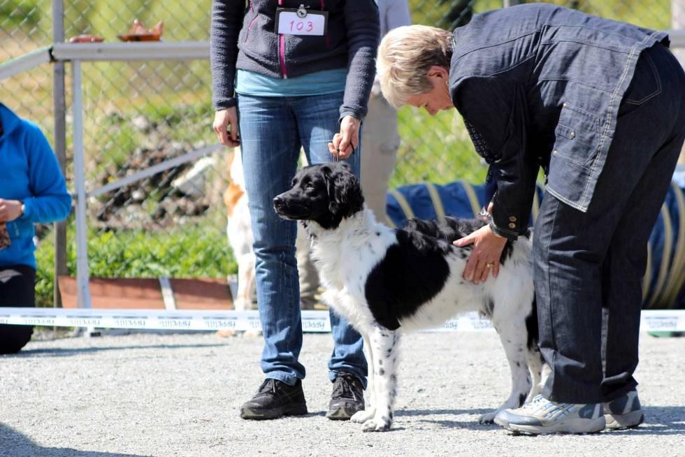 Hundeskolen-Utstilling-av-hund-3