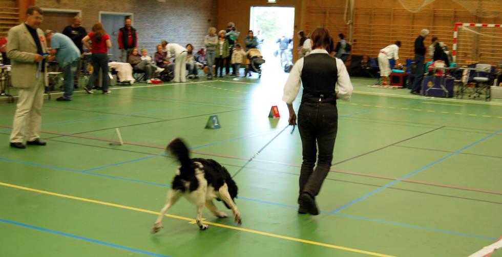 Hundeskolen-Utstilling-av-hund-4