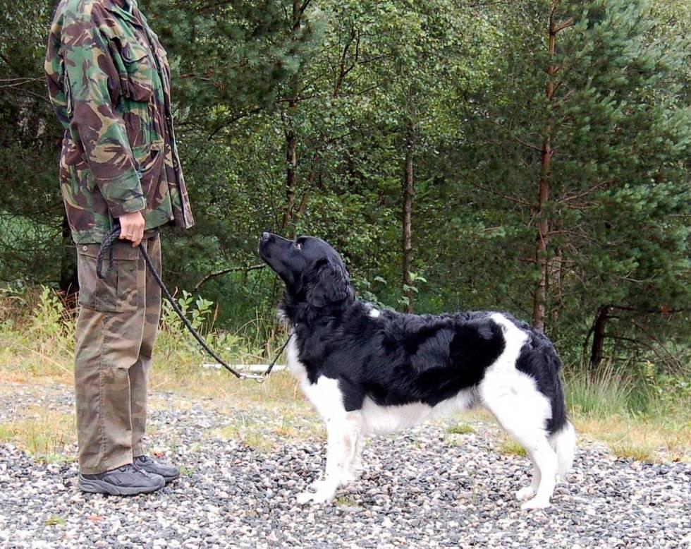 Hundeutstilling-5
