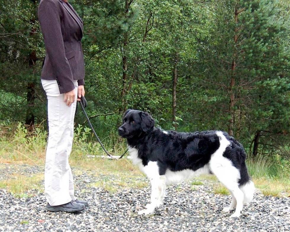 Hundeutstilling-6