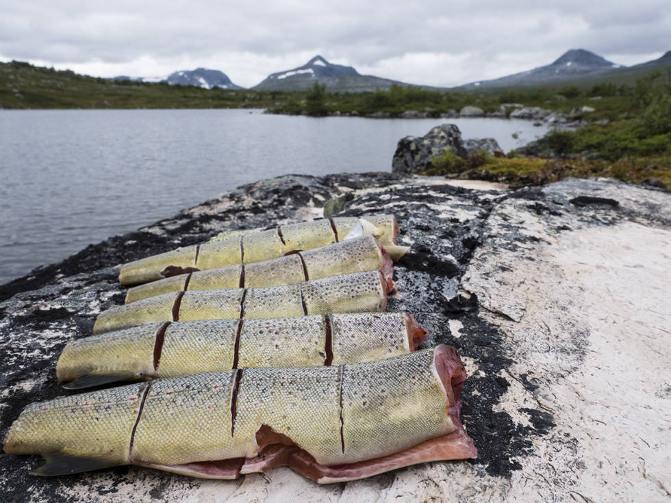 Sløyd fisk ved fjellvann
