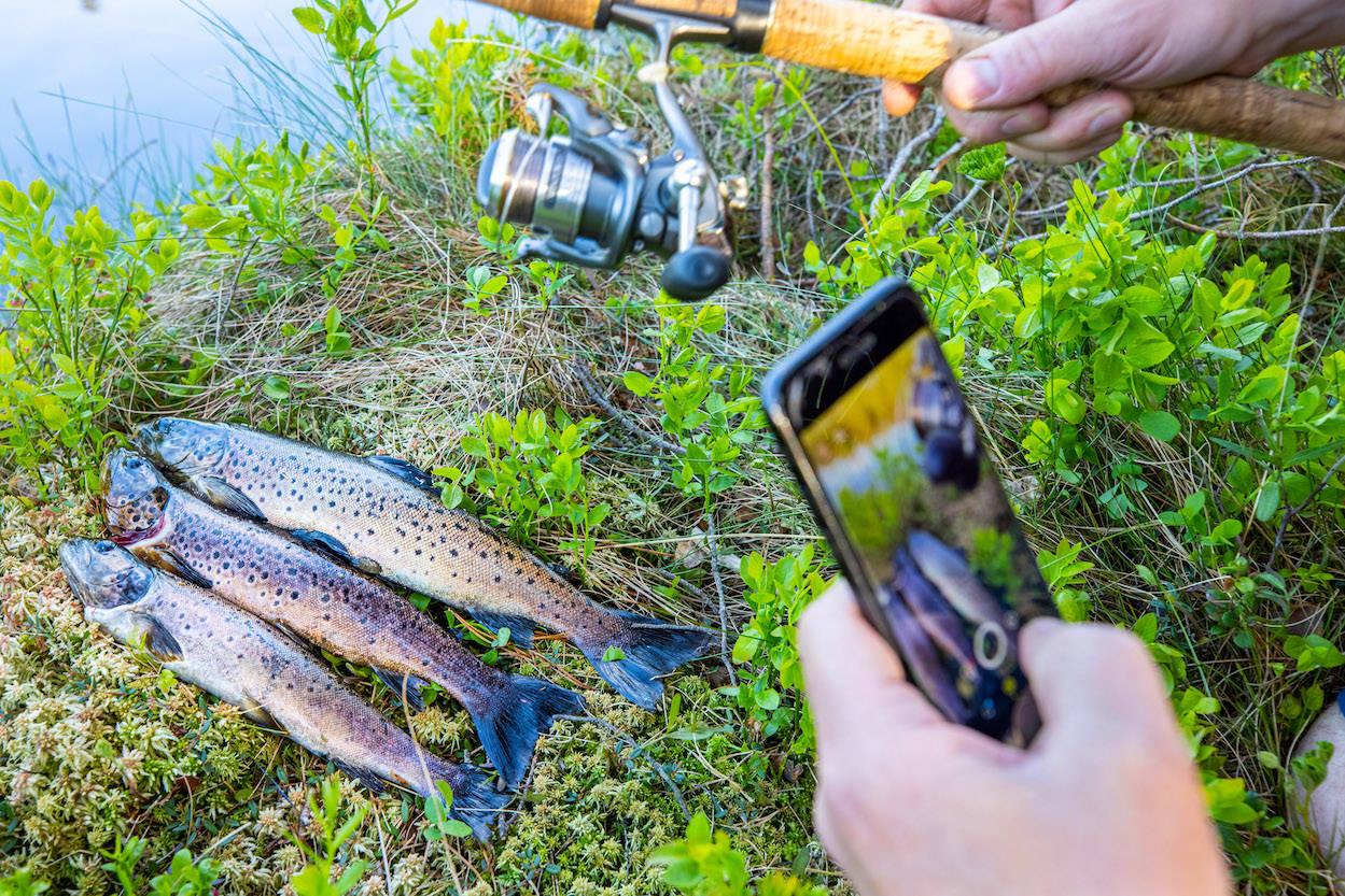 fiske i elv