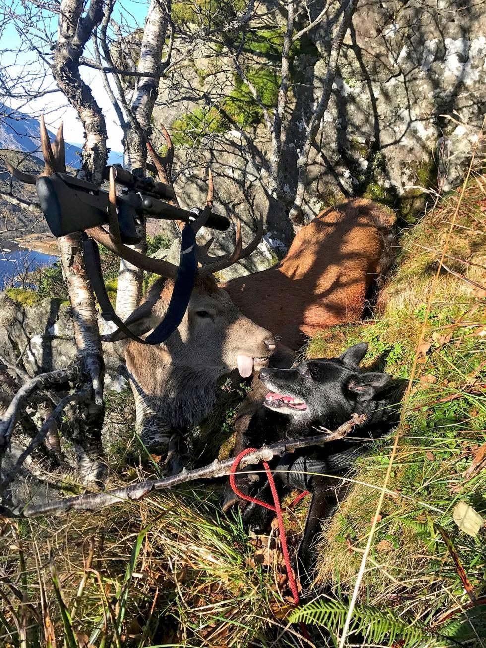 Jakt-med-bandhund-8