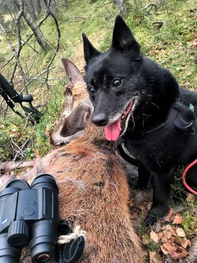 Jakt-med-bandhund-fakta