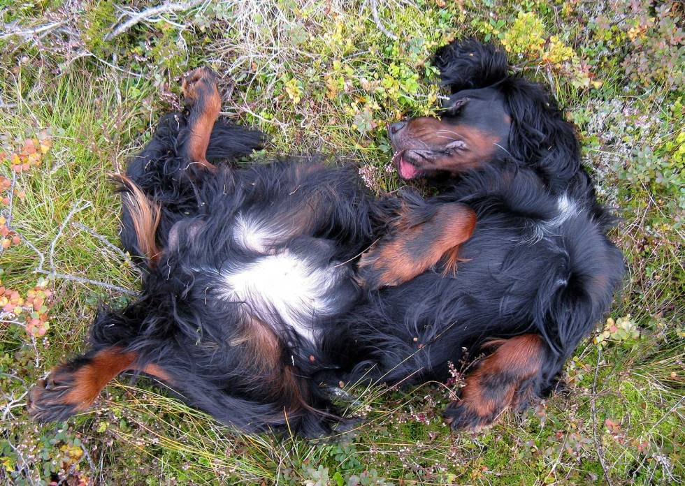 Jakt-med-gammel-hund-2