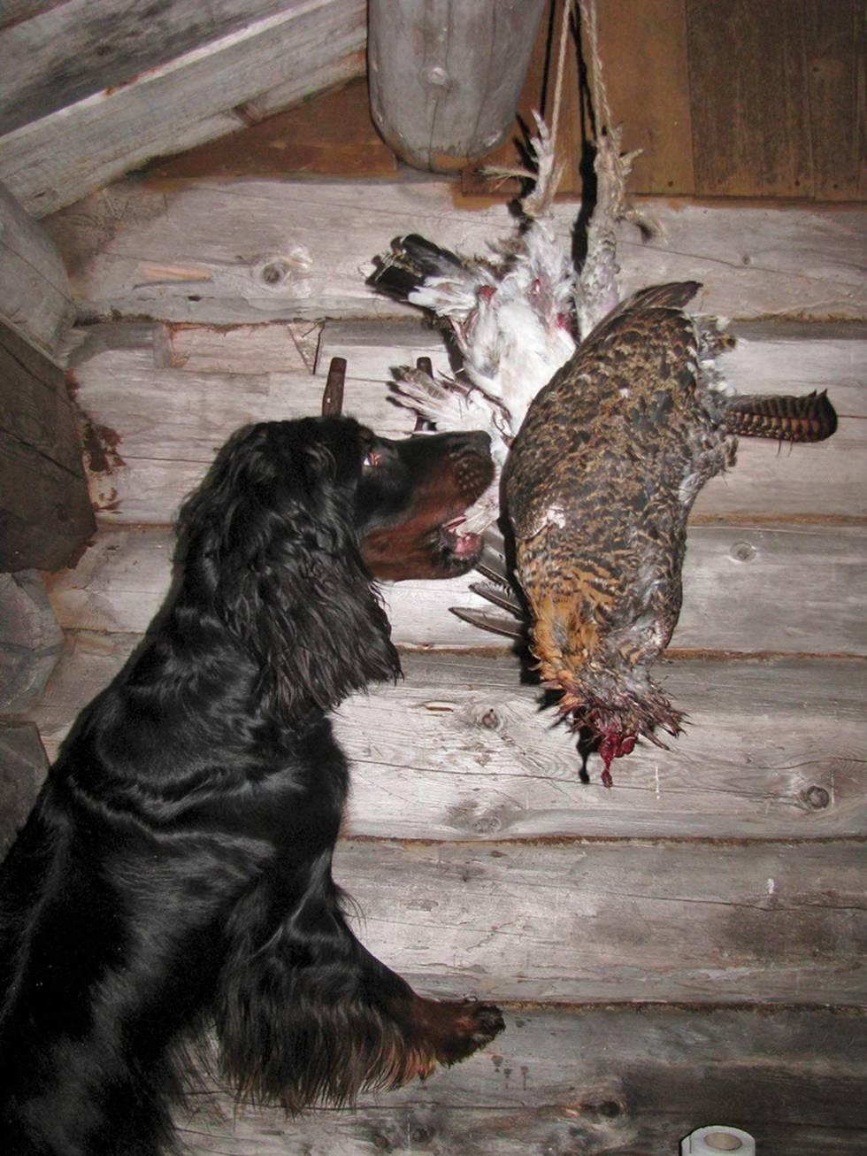 Jakt-med-gammel-hund-4