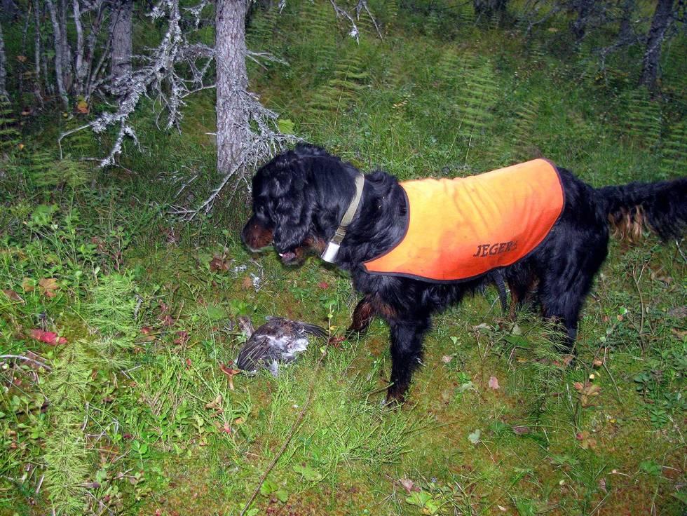 Jakt-med-gammel-hund-7