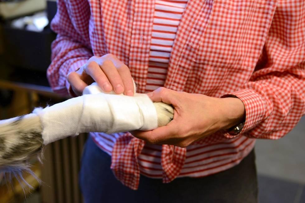 Jakthund-Førstehjelp-veterinærtips-8