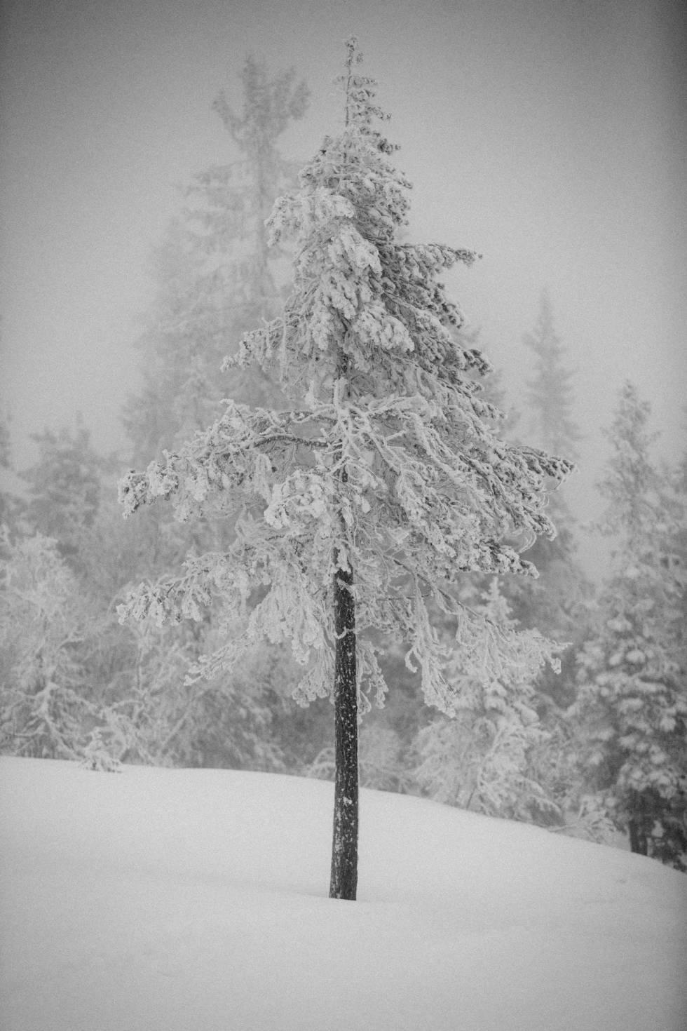 Langrenn-Vikerfjell-5