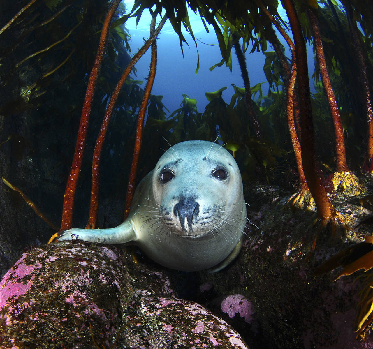 Fotograf og dykker Lill Haugen skal snakke om hvordan forsøpling og stigende grader påvirker livet under vann. Foto: Lill Haugen