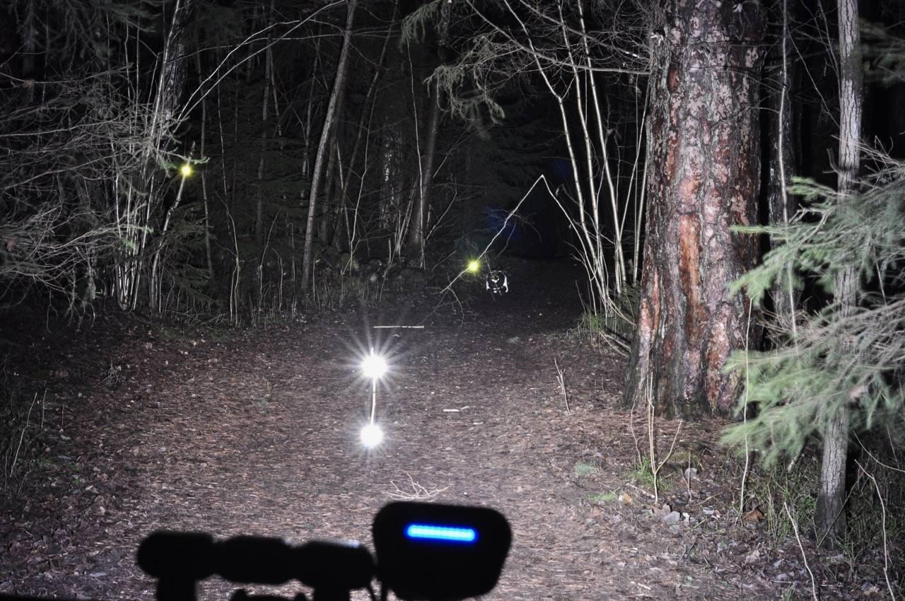 Lupine Alpha lyskjegle