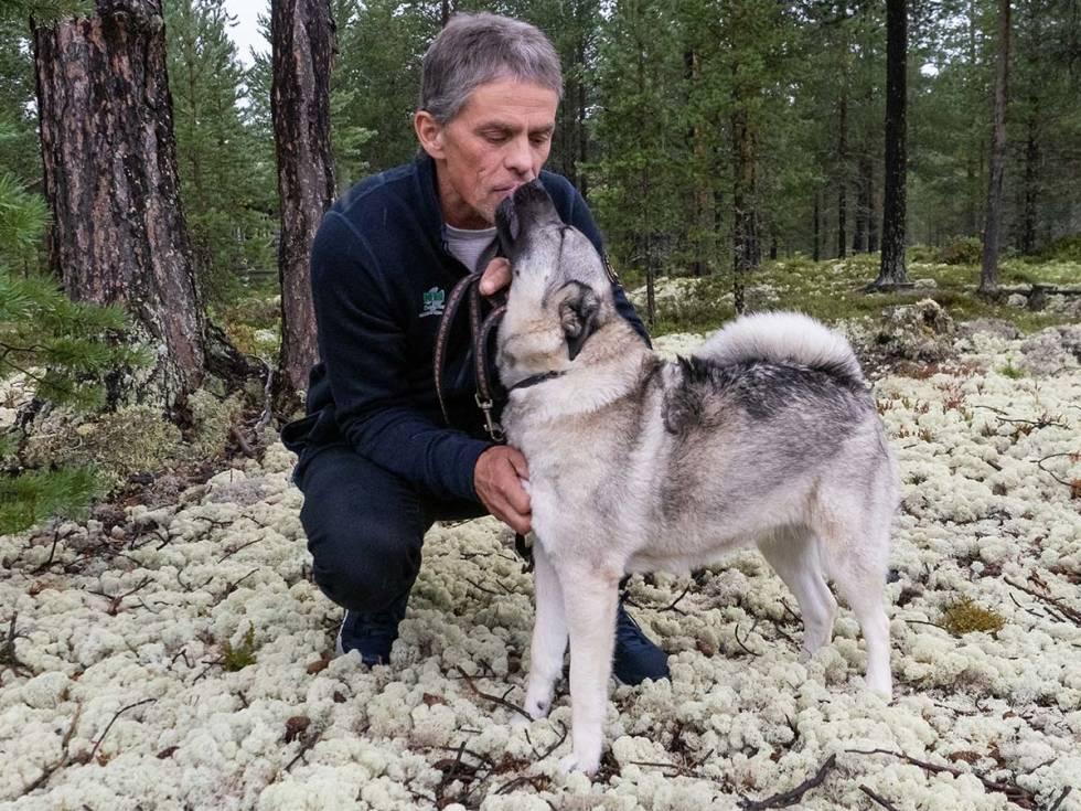 bandhund, elgjakt, elghund grå