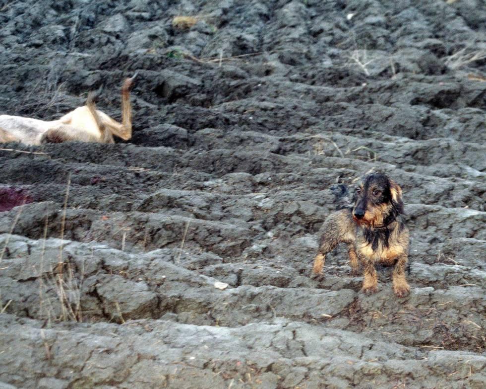 Rådyrjakt-med-drivende-hund-2