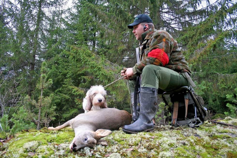 Rådyrjakt-med-drivende-hund-7