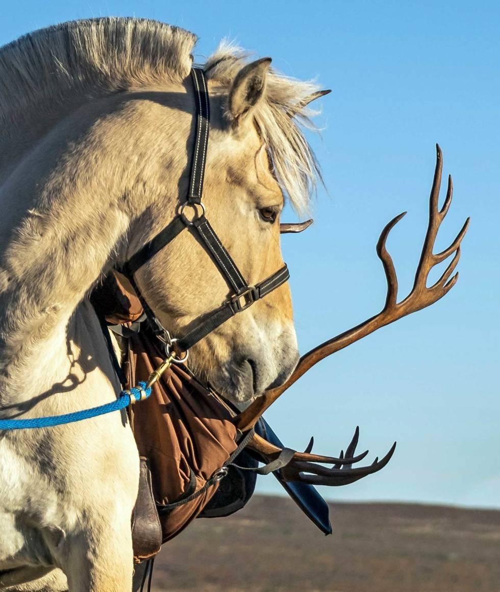 Reinsjakt-med-hest-2
