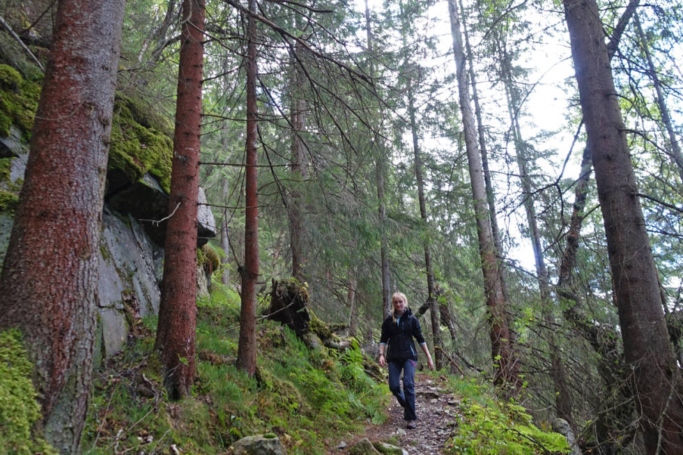 Rjukan Selstali gåtur guide skog