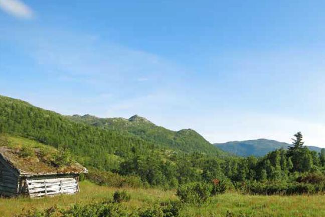 Setra Ringerike Turguide Rauland Telemark